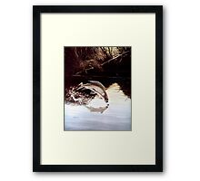 Grayling Leaping Out Of The Water Framed Print