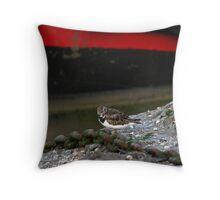 Summer Sanderling Throw Pillow