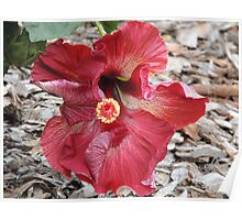 Bold Hibiscus Poster