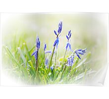 Bluebells on the Forest Poster