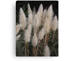 Brush Tails Canvas Print