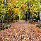 Carriage Road In Fall, Acadia NP, Maine by Dan Hatch