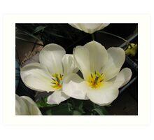 Fair Maidens - Tulips Untouched Art Print
