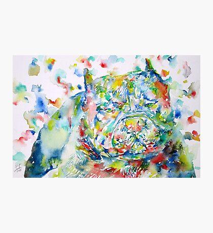 PIT BULL - watercolor portrait Photographic Print
