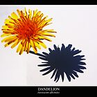 Dandelion (Taraxacum officinale) Labeled by Alan Harman