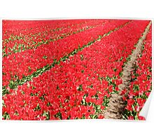Tulip fields 3 Poster