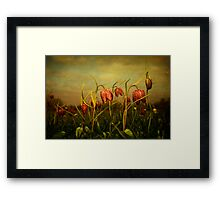 Fritillaries 2013 Framed Print