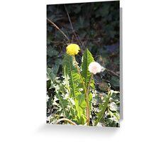 Dandy dandelions Greeting Card