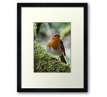 Robin on moss Framed Print