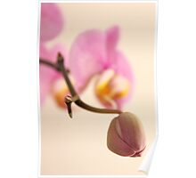 Orchid Bud Poster
