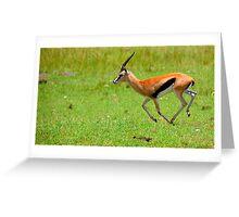Antelope Greeting Card