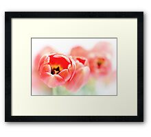 Tulips, a little less fresh... Framed Print