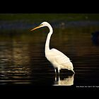 Ardea Alba - Great White Egret In Porpoise Channel - Stony Brook, New York by  Sophie Smith