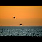 Two Seagulls Flying Over Long Island Sound - Stony Brook, New York by  Sophie Smith
