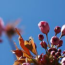 Bloomin' Heck, it might be Summer! by Zen-Art (Zenith)
