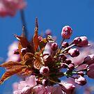 Bloomin Heck!! It really *is* Summer.  by Zen-Art (Zenith)