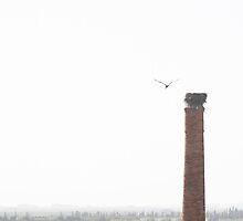 The Stork Flight by europs