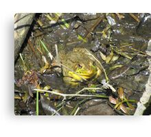 Happy as a Frog Canvas Print