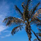 Palm by Georden