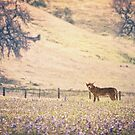 Coyote Meadow by Christopher Burton