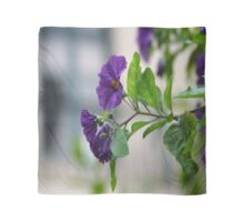 Solanum Rantonnetii With Garden Background Scarf