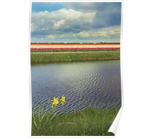 Tulip fields 4 Poster
