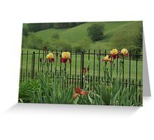 Explicit Bearded Irises (Supreme Sultan ) Greeting Card