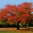 Fire Tree by KatMagic Photography