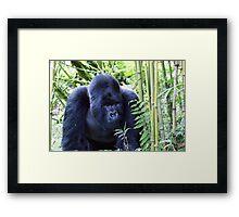 Gorilla Trek Framed Print