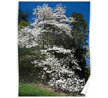 The magestic Magnolia Poster