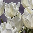 White Tulips 2 by Steven Huszar