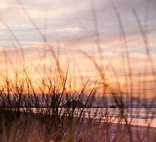 through the grasses by Anne Scantlebury