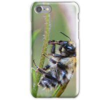 Bee on stalk iPhone Case/Skin