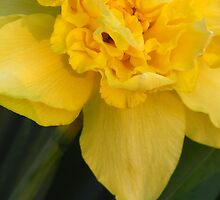 Double Daffy by lorilee