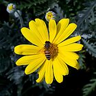 Daisy Bee by sedge808