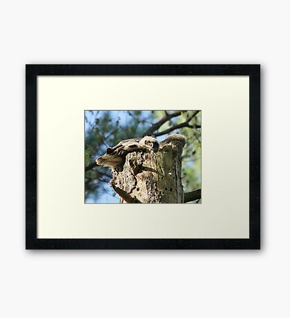 Outgrowing the nest Framed Print
