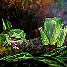 Frogs by venny