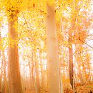 Heavenly by redhairedgirl