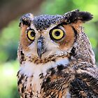 Great Horned Owl by Rosalie Scanlon