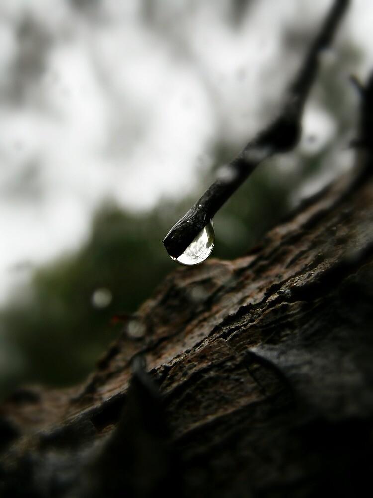 RAIN #167 by Laura E  Shafer