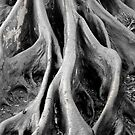 Roots by philw