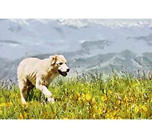 Dog walking by grass painting Photographic Print