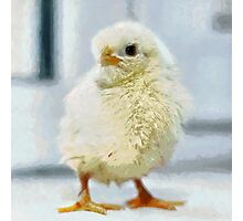 Chick standing on window sill painting Photographic Print
