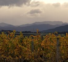 From Autumn Vineyard to the Hills by coffeebean