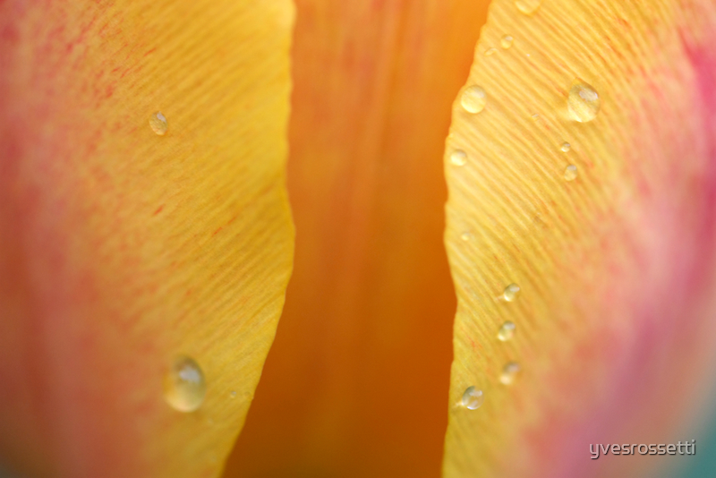 spring yellow by yvesrossetti
