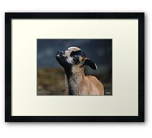 Blowing Kisses Framed Print