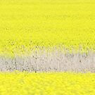 Rapeseed layers by catalinpopro