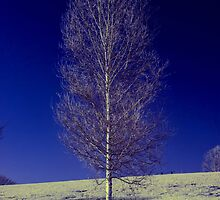 Infrared Tree by printsbypixie