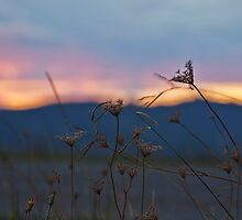 Strands of sunset by Snapsgoodpics