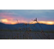 Strands of sunset Photographic Print